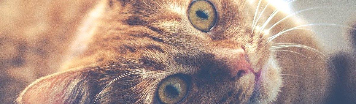 animaux-domestiques-copropriete-gestion-syndic-lyon