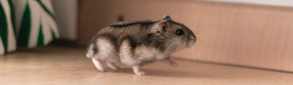 rat-copropriete-facture-payer-deratiseur